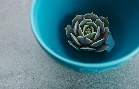 succulent_01