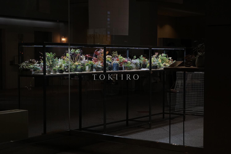tokiiro_minato002